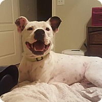 Adopt A Pet :: Pablo - Arlington, MA