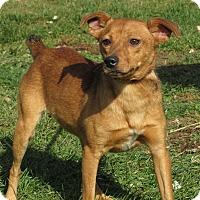 Adopt A Pet :: Brock - Unionville, PA