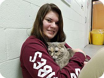 Calico Cat for adoption in Elyria, Ohio - Baby