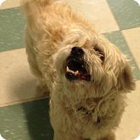 Adopt A Pet :: RASCAL - Cleveland, TN