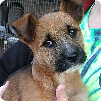 Adopt A Pet :: Jasmine Rice - Phoenix, AZ