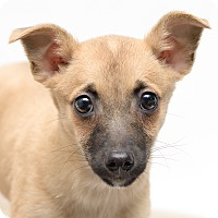 Adopt A Pet :: Spinner - Westfield, NY