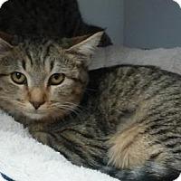 Adopt A Pet :: Elizabeth - Fountain Hills, AZ
