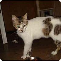 Adopt A Pet :: Spots - Tomball, TX