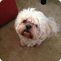 Adopt A Pet :: **TIKI** - Rockaway, NJ