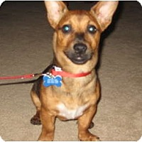 Adopt A Pet :: Oliver - Commerce City, CO