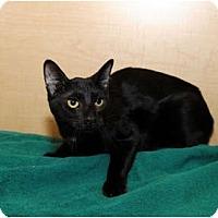 Adopt A Pet :: Jared - Farmingdale, NY