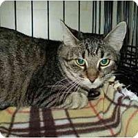 Adopt A Pet :: Preva - San Ramon, CA