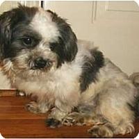 Adopt A Pet :: Lucas - Mooy, AL