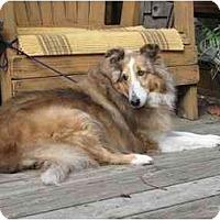 Adopt A Pet :: Leila - Trabuco Canyon, CA