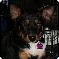 Adopt A Pet :: Michaela - Arlington, TX