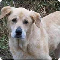 Adopt A Pet :: Paxx - Albany, NY