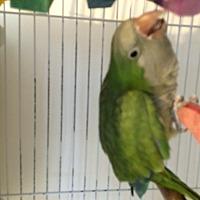 Adopt A Pet :: Teedo - Punta Gorda, FL