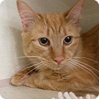 Adopt A Pet :: Brute - Berkeley Hts, NJ