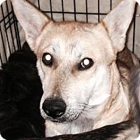 Adopt A Pet :: A318210  Cora - San Antonio, TX