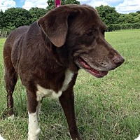 Adopt A Pet :: Lady - Key Biscayne, FL