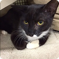 Adopt A Pet :: Marcel - East Meadow, NY