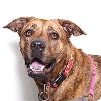 Adopt A Pet :: Lila - Sudbury, MA