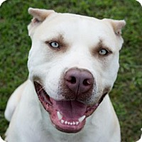 Adopt A Pet :: Zorro - Livingston, LA