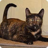 Adopt A Pet :: Cinnamon - Larned, KS