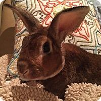 Adopt A Pet :: Milhouse - Watauga, TX