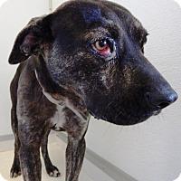 Adopt A Pet :: Boomer - Terrell, TX