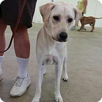 Adopt A Pet :: Dakota - Courtesy Listing - Cleveland, OH