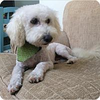 Adopt A Pet :: Murray - Las Vegas, NV