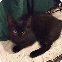Adopt A Pet :: Peanut - Barrington Hills, IL