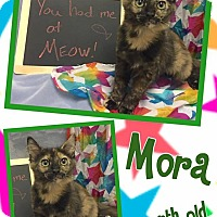 Adopt A Pet :: MORA - Lexington, NC