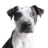 Pointer Mix Dog for adoption in Wilmington, Delaware - Spade