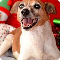 Adopt A Pet :: Jack - Okeechobee, FL