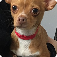 Adopt A Pet :: Buster Brown - Oswego, IL