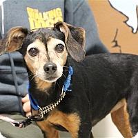 Adopt A Pet :: Mooney - Elyria, OH