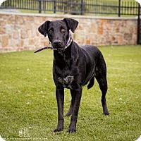 Adopt A Pet :: Dilly - Davenport, IA