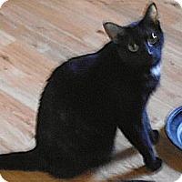 Adopt A Pet :: Bella - Bear, DE