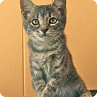 Adopt A Pet :: Mystique - Atlanta, GA