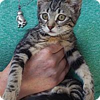 Adopt A Pet :: Sevier - Davis, CA