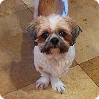 Adopt A Pet :: Gizmo - Gig Harbor, WA