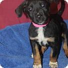 Adopt A Pet :: Celeste