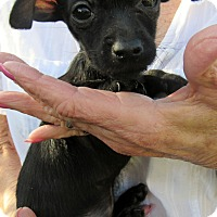 Adopt A Pet :: Jellybean - Silsbee, TX