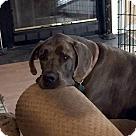 Adopt A Pet :: Harley - Courtesy Listing
