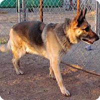 Adopt A Pet :: Jimmy - San Tan Valley, AZ