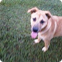 Adopt A Pet :: Corey #2 - Graceville, FL