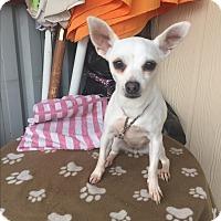 Adopt A Pet :: IZANA - Elk Grove, CA