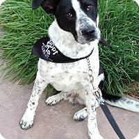 Adopt A Pet :: COOPER - San Pedro, CA