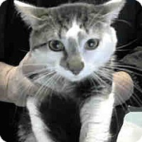 Adopt A Pet :: URGENT on 2/11 at DEVORE - San Bernardino, CA