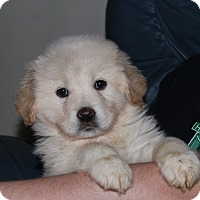 Adopt A Pet :: Angel - Huntsville, AL