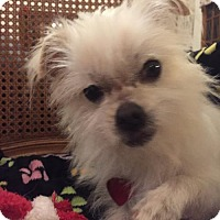 Adopt A Pet :: Pickles - SPECIAL NEEDS - Tomball, TX