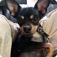 Adopt A Pet :: Aldo - Las Vegas, NV